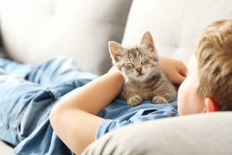 Co oznacza kocie miauczenie? Odgłosy