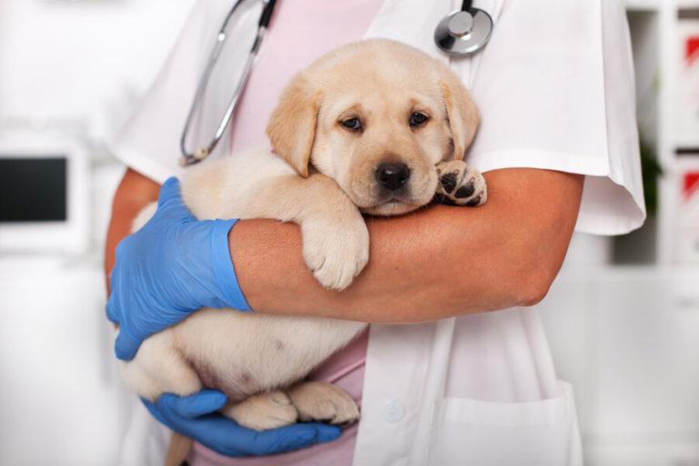 Czym jest nużeniec u psów?